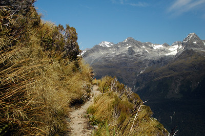 The trail, heading south along the eastern side of the Hollyford Valley